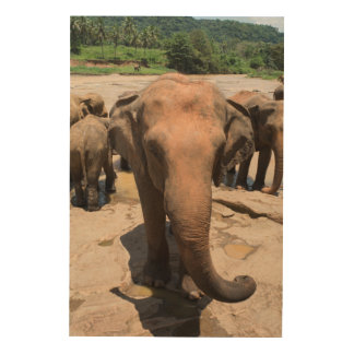Elefantgruppenporträt, Sri Lanka Holzdruck