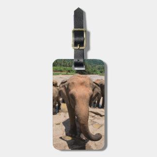 Elefantgruppenporträt, Sri Lanka Kofferanhänger