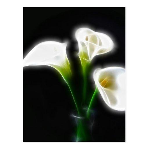 elegante calla lilien blumen 10 modern postkarten zazzle. Black Bedroom Furniture Sets. Home Design Ideas