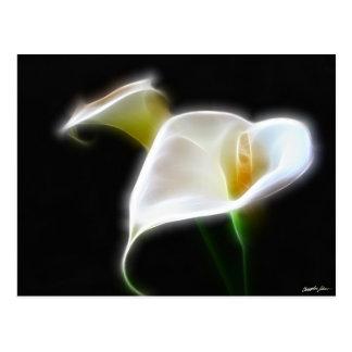 Elegante Calla-Lilien-Blumen 16 modern Postkarte