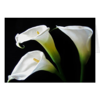 Elegante Calla-Lilien-Blumen 7 Karte