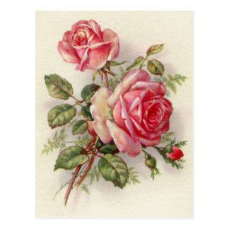 Elegante Postkarte der Vintagen BlumenRose