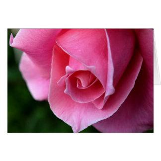 Elegante rosa Rosen-Anmerkungs-Karte Karte