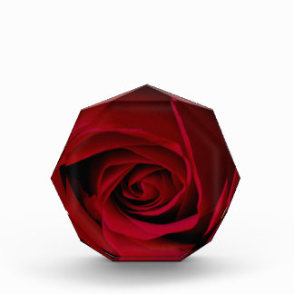 Elegante Rote Rose Acryl Auszeichnung