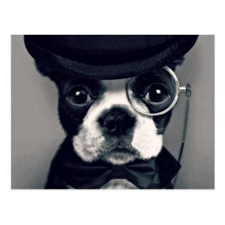 Elegante u. Hansome französische Bulldogge Postkarten