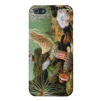 Eleganter Seeanemonen-feine Kunst iPad Fall-Speck iPhone 5 Schutzhülle