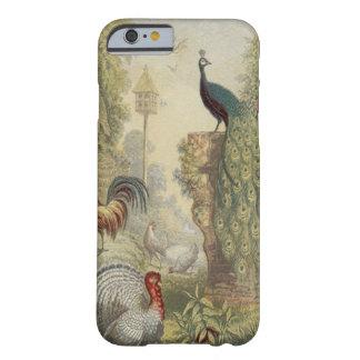 Eleganter Vintager Pfau u. andere Vögel Barely There iPhone 6 Hülle