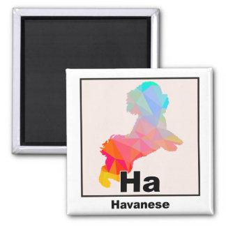 Elementares Havanese Quadratischer Magnet
