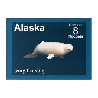 Elfenbein-Weißwal - Alaska-Porto Acryldruck