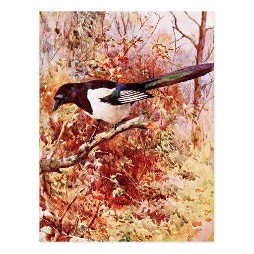 Elster im Herbst Postkarten