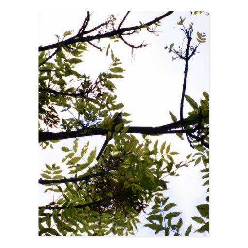 Elster im Holz Postkarten