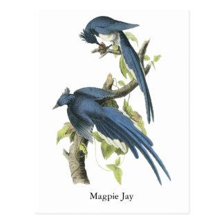 Elster-Jay John Audubon Postkarten