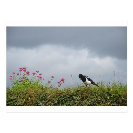 Elster und wilde Blumen Postkarte