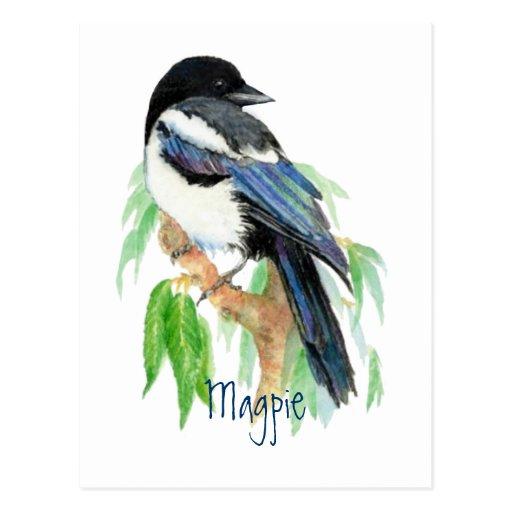 Elster, Vogel, Garten, Natur, wild lebende Tiere Postkarten