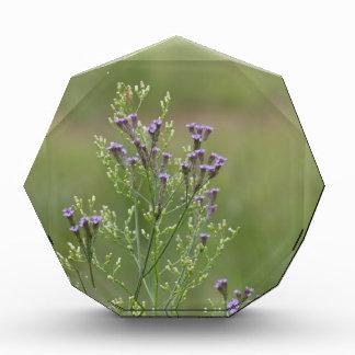 Empfindliche Lavendel-Verbene-Wildblumen Auszeichnung