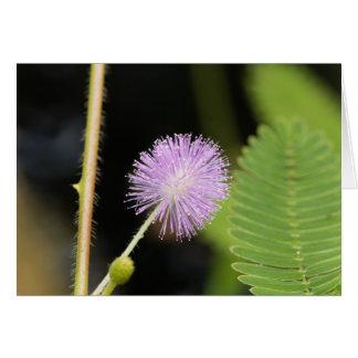 Empfindliche Pflanze (Mimose pudica) Karte
