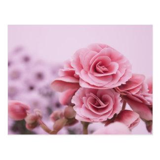 Empfindliche rosa Blumen Postkarte