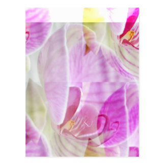 Empfindliche und schöne Orchidee mit Blumen Postkarte