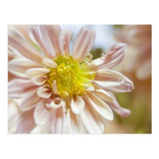 Empfindlicher Pfirsich-Blumen-und Wasser-Tropfen Postkarte