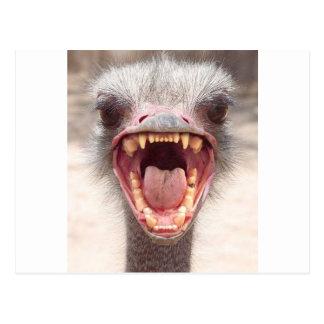 Emu Postkarte
