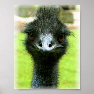 EMU-VOGEL-FOTO-PORTRÄT