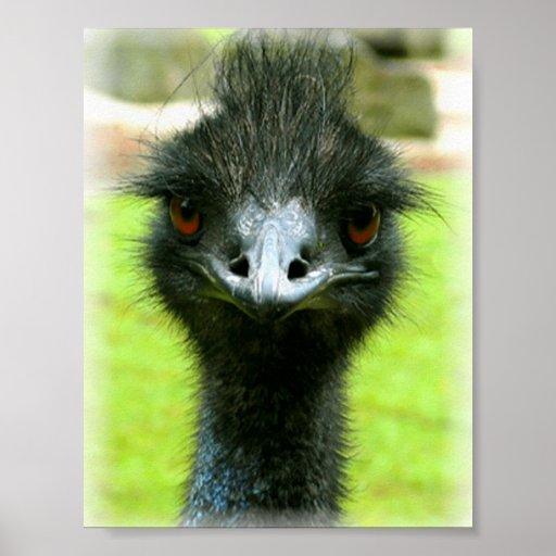 EMU-VOGEL-FOTO-PORTRÄT POSTERDRUCK