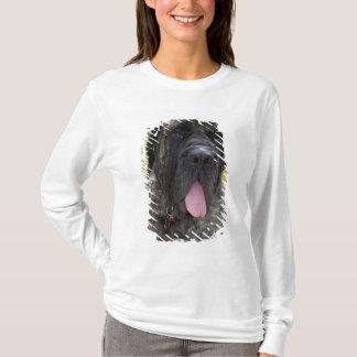 Englisch Mastif Hund in Bryon, Ohio. 2 T-Shirt