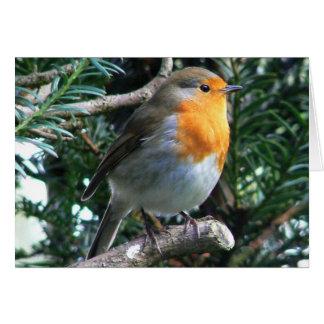 Englisch-Robin-Geburtstag Grußkarte
