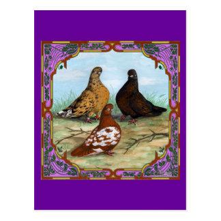 Englisch Shortfaced Tauben gerahmt Postkarte