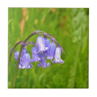 Englische Bluebell-Blumen-Fliese Fliese