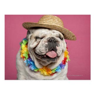 Englische Bulldogge (18 Monate alte) ein Stroh tra Postkarten