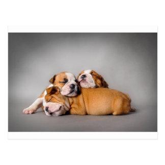 Englische Bulldogge Schlafens Postkarte