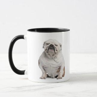 Englische Bulldogge, sitzend vor Weiß Tasse
