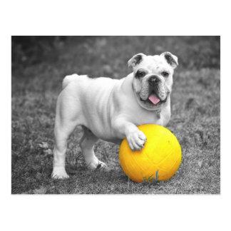 Englische Bulldoggen-Hündchen-Postkarte Postkarte