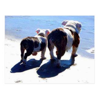 Englische Bulldoggen Postkarte