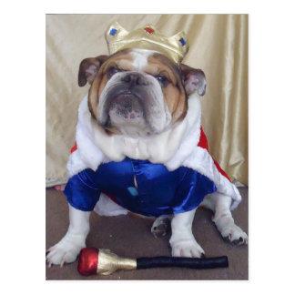 Englische Bulldoggen-Postkarten Postkarte