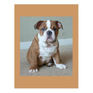 Englische Bulldoggen-Welpen-Postkarten-Postkarte Postkarte