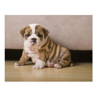 Englische Bulldoggenwelpen Postkarte