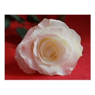 Englische Rosen-Postkarte