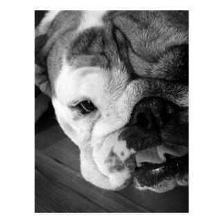 Englischer Bulldoggen-Schwarzweiss-Welpe Postkarte