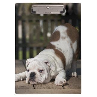 Englischer Bulldoggen-Welpe Klemmbrett
