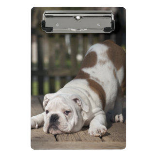 Englischer Bulldoggen-Welpe Mini Klemmbrett