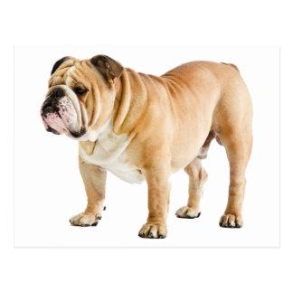 Englischer Bulldoggen-Welpen-Hund - hallo, Liebe, Postkarte