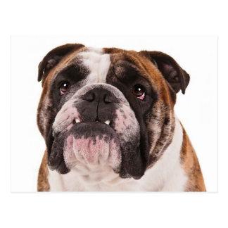 Englisches Bulldoggen-Hündchen - hallo, Fräulein Postkarte