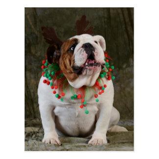 Englisches Bulldoggen-Ren Postkarte