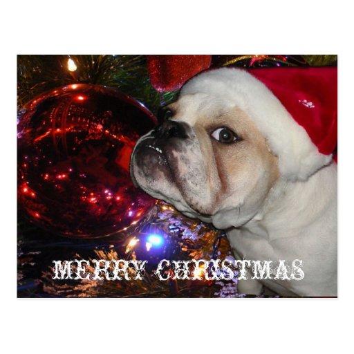 Englisches Bulldoggen-Weihnachten Postkarte