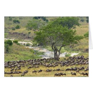 Enorme Wildebeestherde während der Migration, Karte