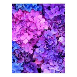 Enormes Bündel lila und blaue Hydrangeas Postkarte