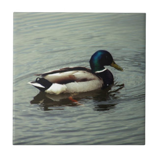 Ente am Wasser Kleine Quadratische Fliese