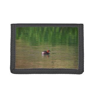 Ente des kleinen Grebe in züchtendem Gefieder